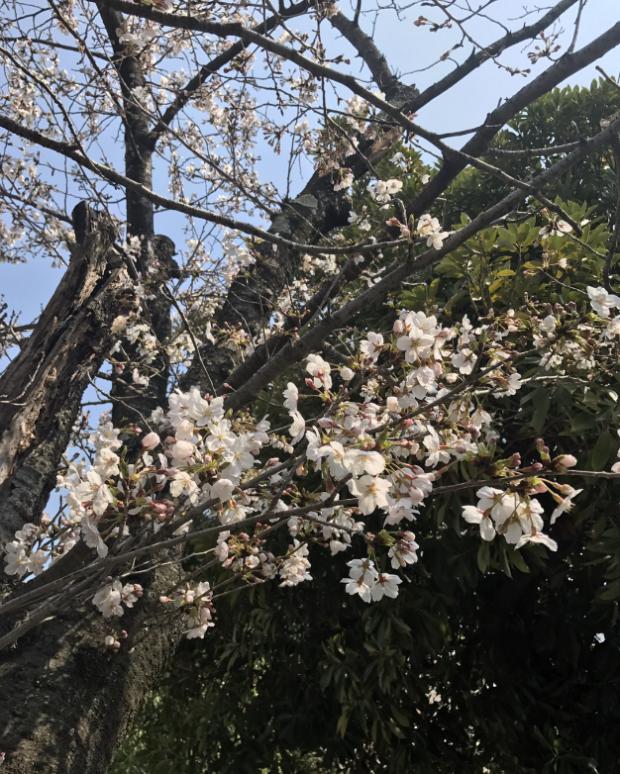 スクリーンショット 2018-03-26 19.20.53